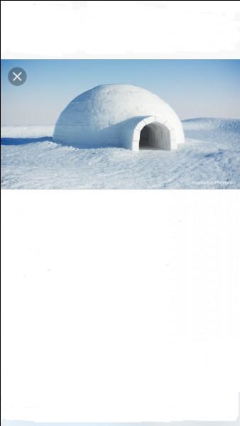 Quel animal vit dans un igloo ?