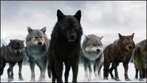 Qui est loup-garou ?