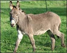 Quel nom donne-t-on au cri de l'âne ?