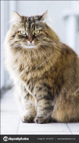 Aimes-tu les gros chats ?