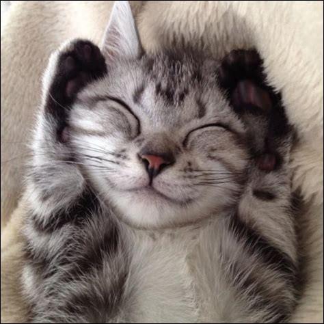 Les chats peuvent sourire volontairement.
