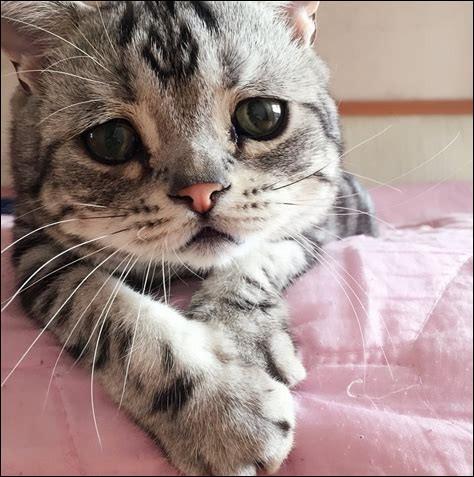 Les chats ressentent la tristesse.