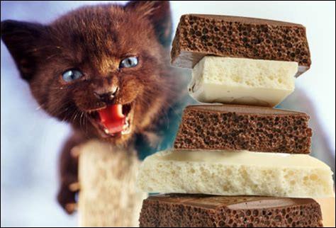 Les chats peuvent manger du chocolat.