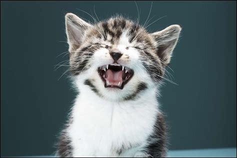 Les chats peuvent avoir un rhume.