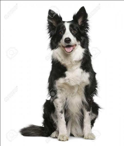 Et ce chien là ?