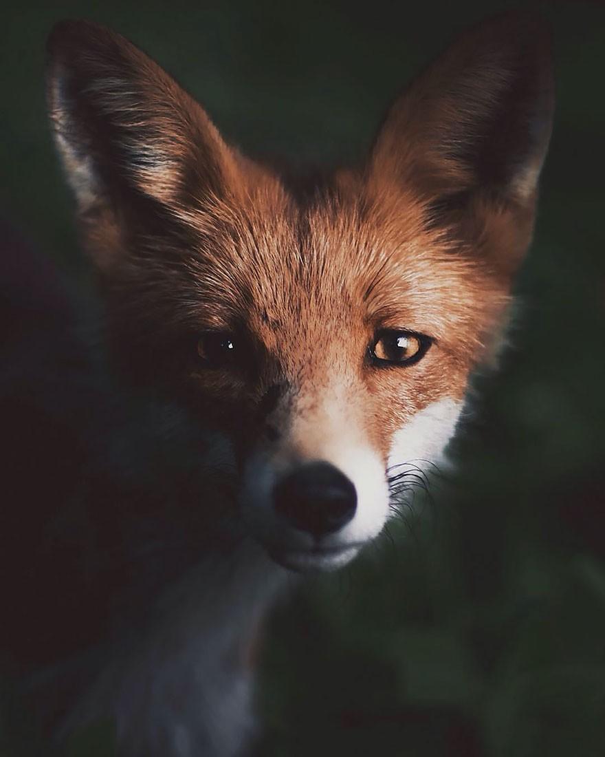 Quel animal es-tu ? (2)