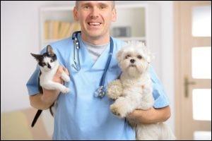 Je vois... Et quelle est la durée de vos études après le baccalauréat pour devenir vétérinaire ?