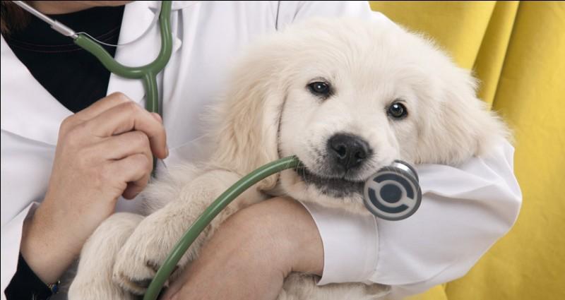 Si vous voulez par exemple soigner des animaux aux États-Unis, où pouvez-vous passer votre diplôme ?