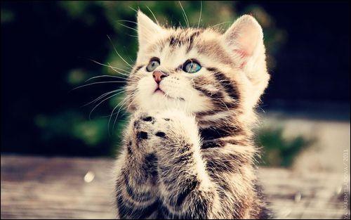 Pendant tout ce test, imagine que tu es un chat. Si tu devais te donner une qualité, ce serait...