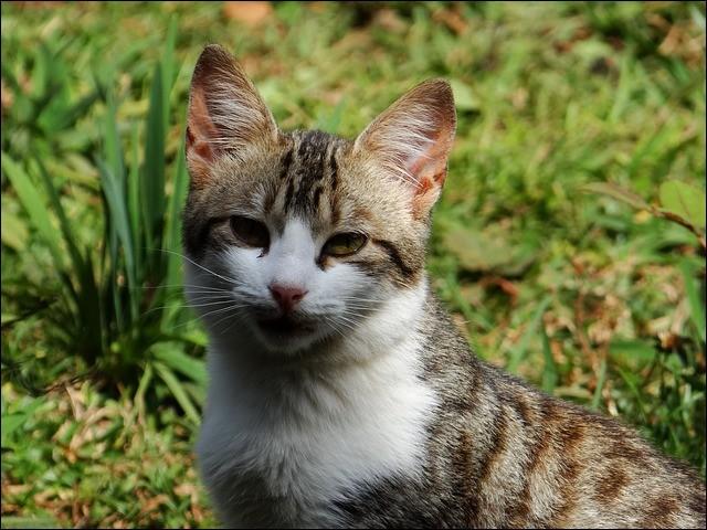 Tu étais un ancien chat domestique et on te lâche en pleine forêt puis on t'abandonne. Que fais-tu ?