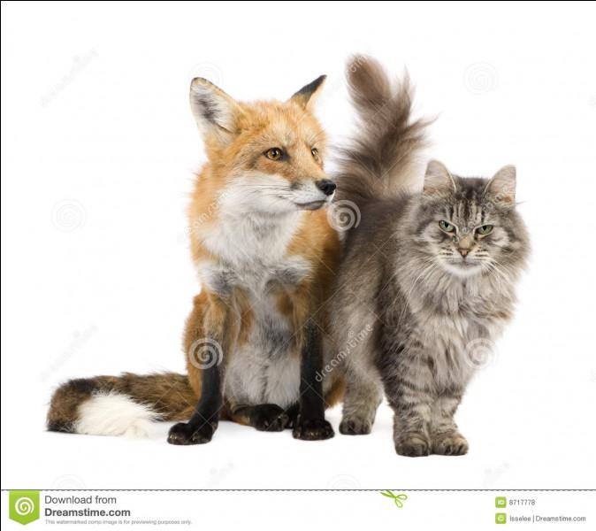 Lequel est un animal domestique ?