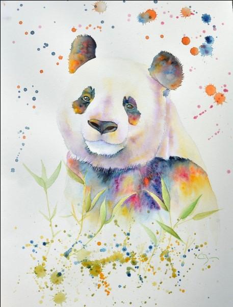 Un panda est...