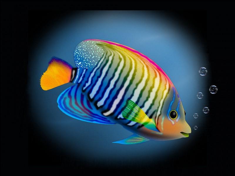 Dans le mot «poisson-rouge», on devine que le poisson est...
