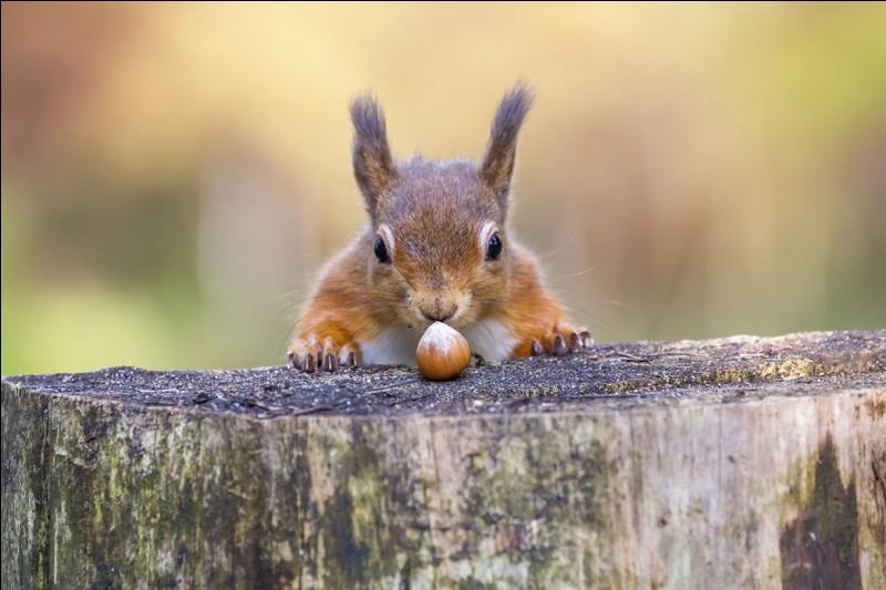 Les écureuils hibernent.