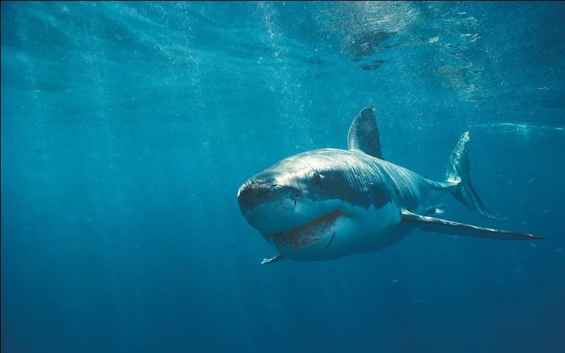 Est-il un ancêtre des requins ?