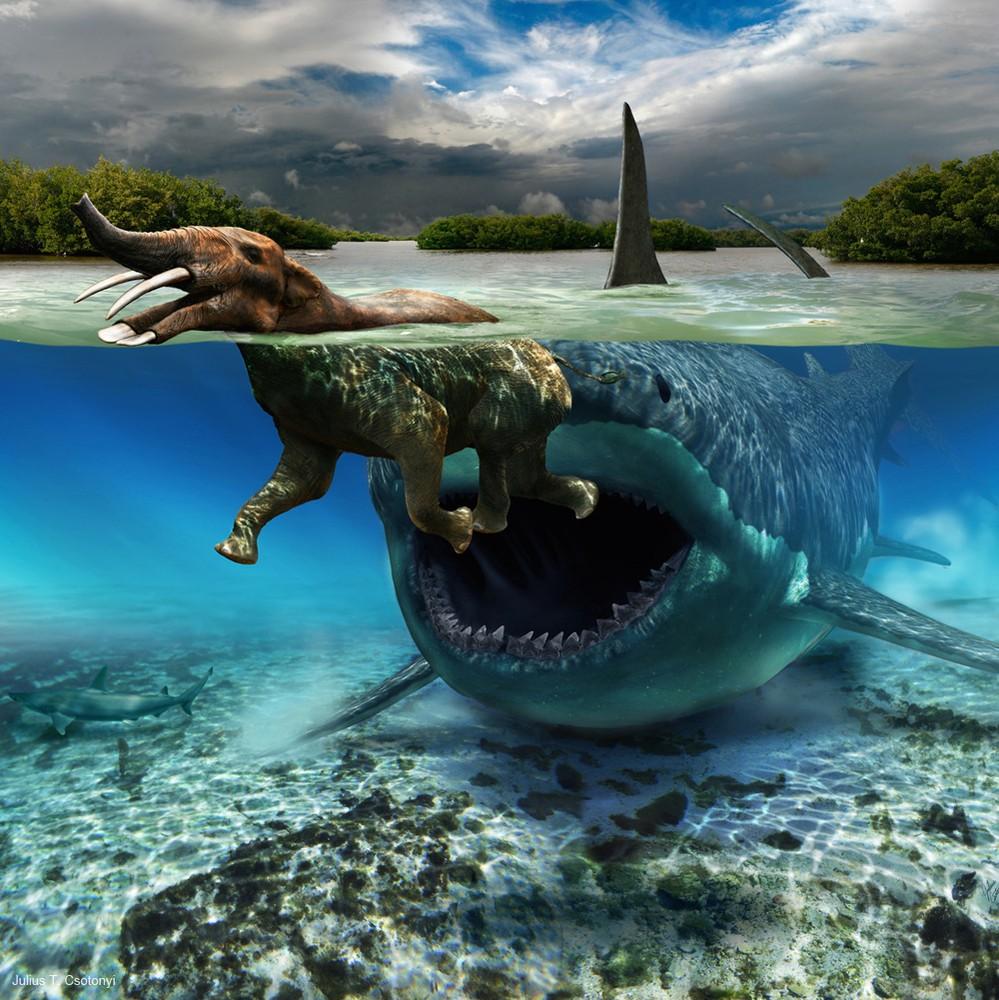 Carcharodon megalodon