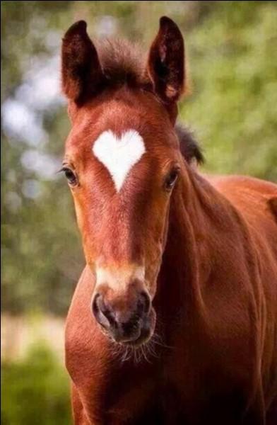 La femelle du cheval est...
