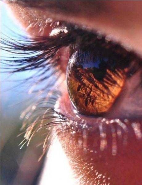 Quelle est la partie colorée de l'oeil humain ?