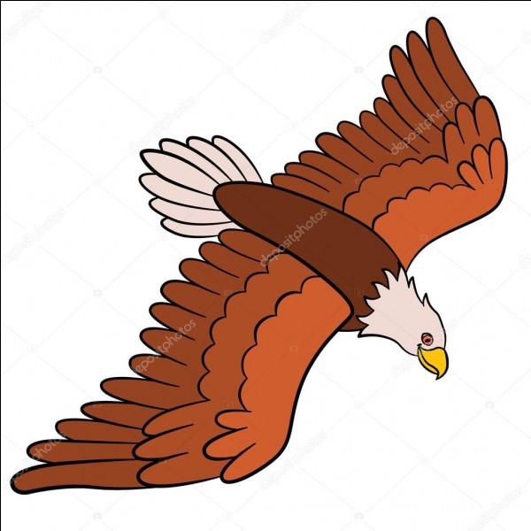 On dit que l'aigle... (Il y a 2 réponses possibles.)