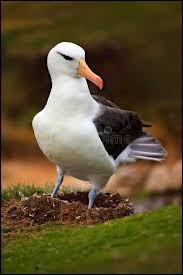 On dit que l'albatros... (Il n'y a qu'une réponse possible.)