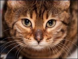 Que fait le chat ? (3 réponses possibles)