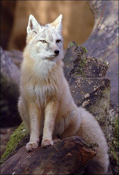 Dans les fables de La Fontaine, le renard représente...