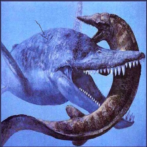 Qui gagne entre un liopleurodon et un prédator x ?