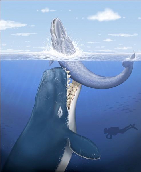 Le monstre du Loch Ness existe-t-il ?