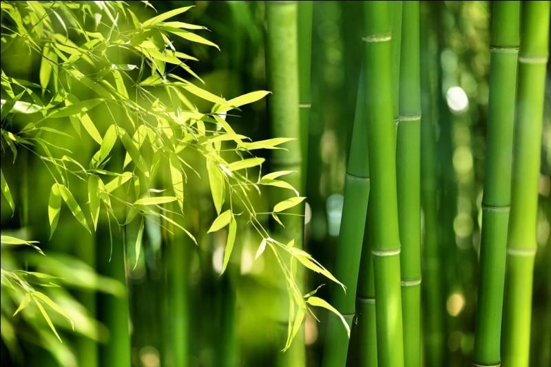 Le vert vif possède des vertus apaisantes pour les yeux...
