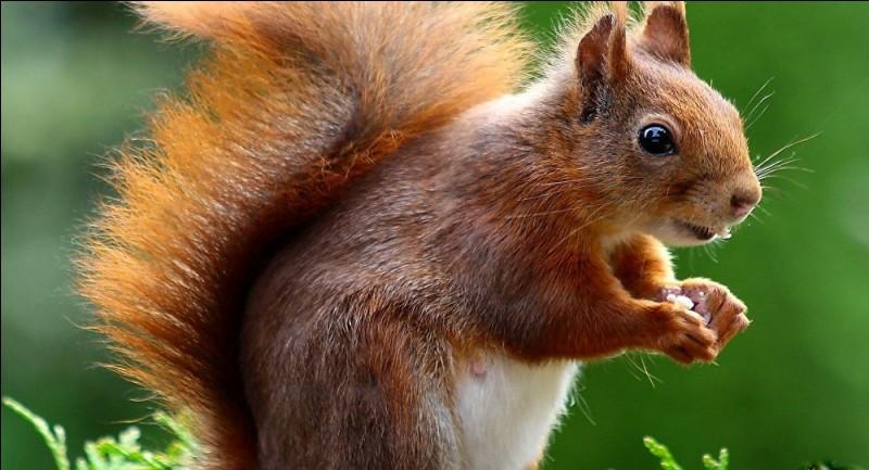 L'écureuil est un sylviculteur hors-pair.