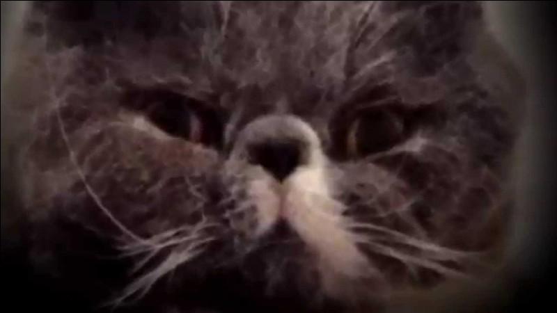 Comment s'appelle l'autre chat de Squeezie ?