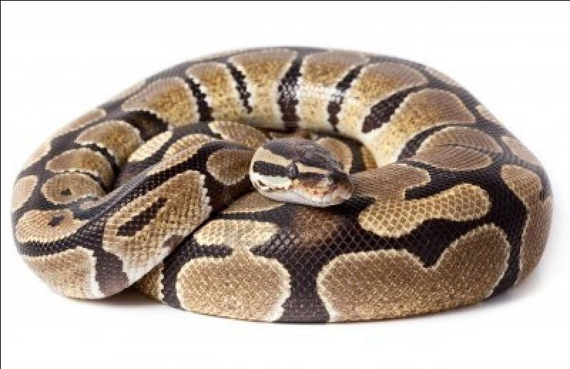 Comment s'appelle ce reptile ?