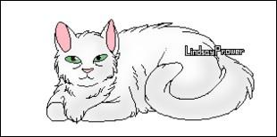 Quel est le nom de chaton d'Aile Rousse ?
