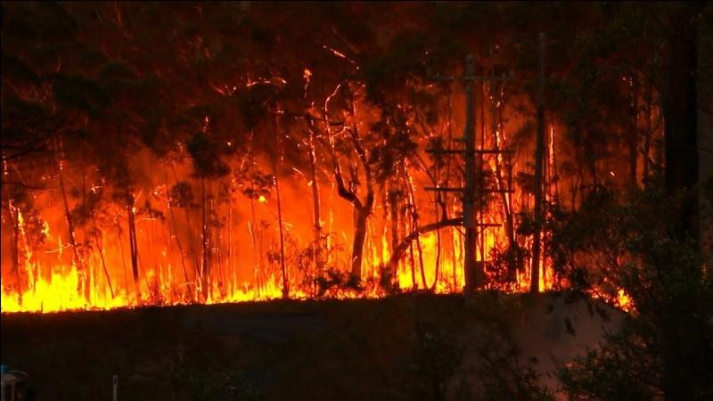 Étais-tu présent(e) lors de l'incendie de la forêt ?