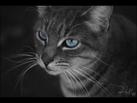 Ce chat a deux frères et sœurs.