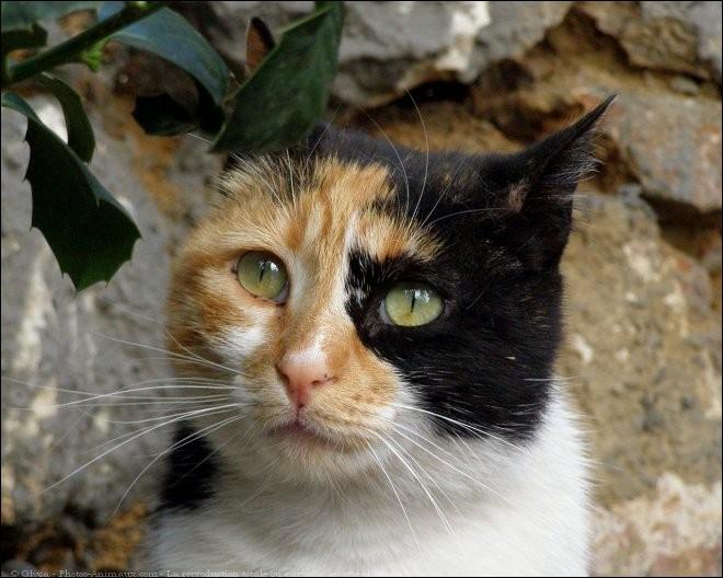 C'est une guérisseuse du clan du Tonnerre.