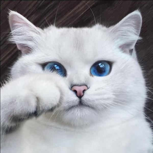 Facile !Ce chat n'est pas né dans un clan.