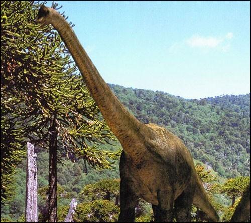 Combien de mètres le Brachiosaure mesurait-il ?