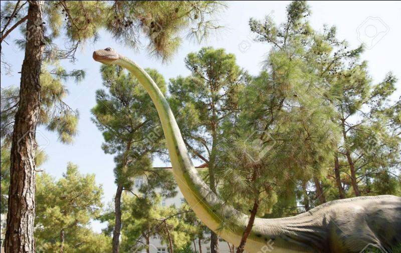 Quelle était la longueur du cou de Mamenchisaurus ?