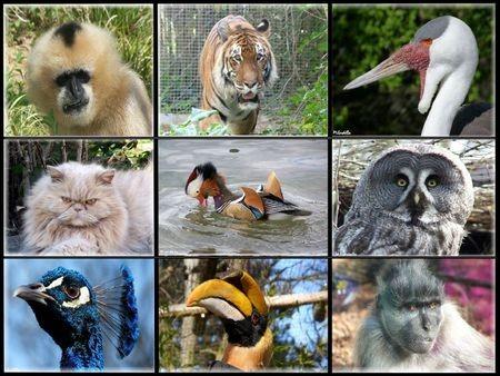 Quels animaux préfères-tu ?