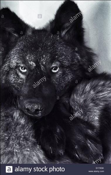 Quel est le nombre approximatif de loups en France ?