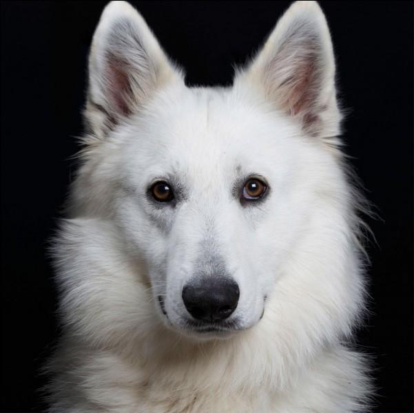 Un chien blanc rentre dans la mer Noire. Comment en ressort-il ?