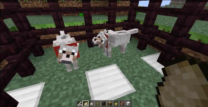 Agentgb, youtubeur Minecraft, possède un chien sur Minecraft (et dans la vraie vie aussi). Comment s'appelle-t-il ?