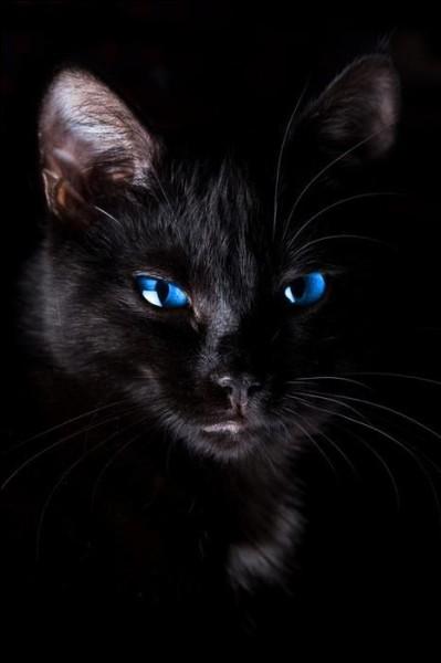 ... adore les chats !