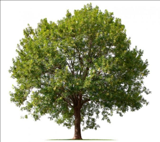 Traduis ''arbre''.