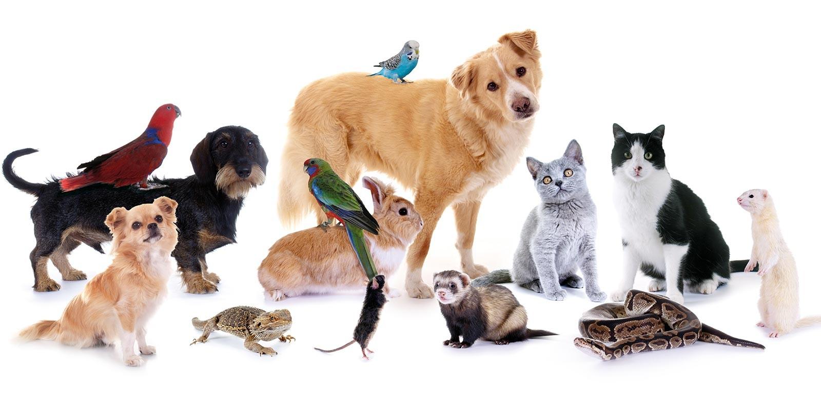 Quel animal sommeille en toi ?