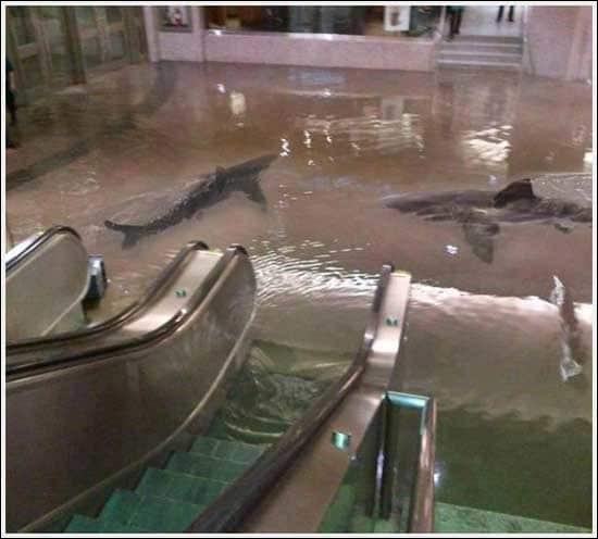 Incroyable, des requins à l'intérieur d'un magasin ! Vrai ou faux ?