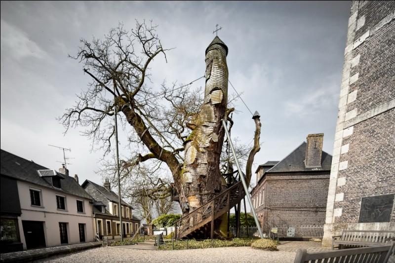 Un énorme arbre recouvrant une chapelle entière ! Est-il réel ?