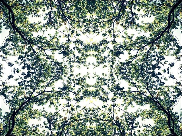 À votre avis, ces feuillages formant une œuvre assez incroyable existent-ils réellement, ou sont-ils le fruit d'un photomontage ?