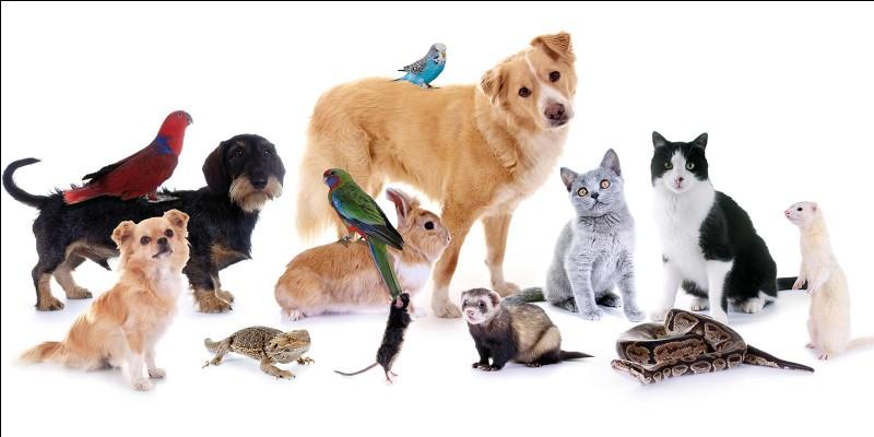 Quel animal préfères-tu parmi ceux-là ?
